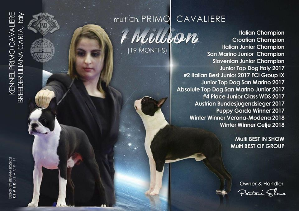 1 Million - Multi ch Boston Terrier