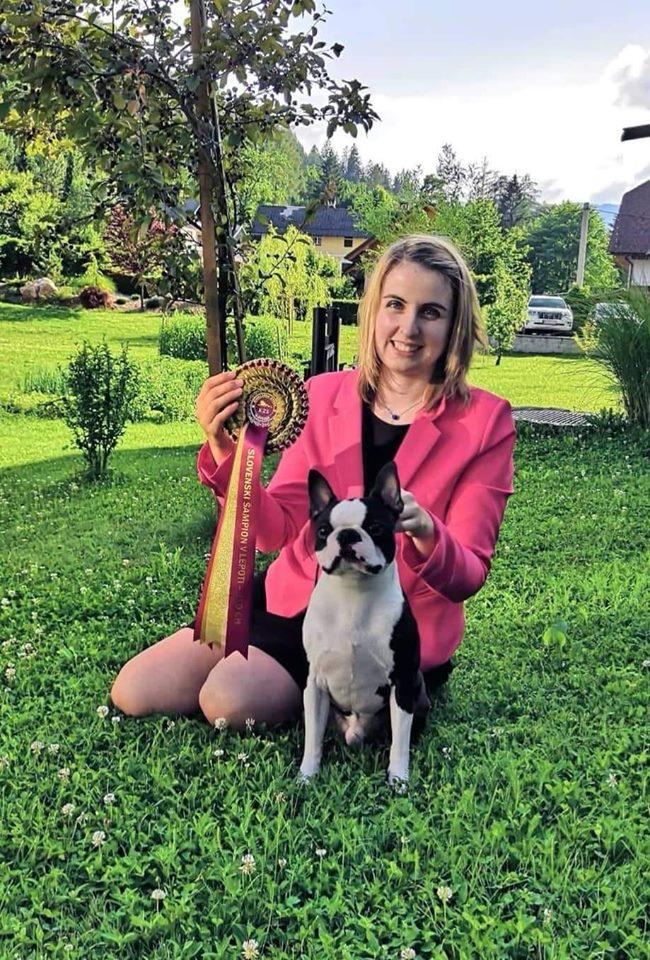 IDS BLED 1 Boston Terrier