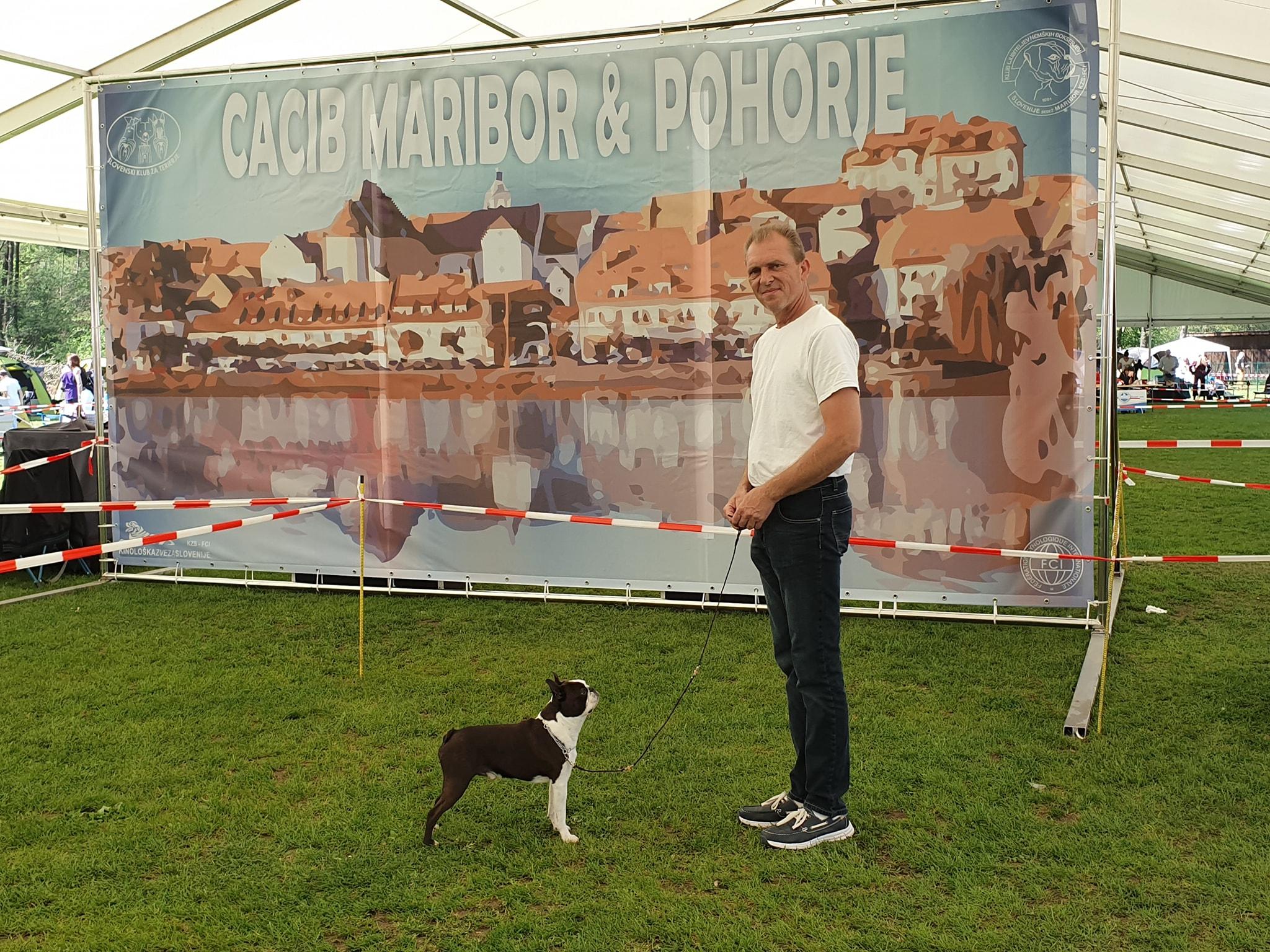 IDS Maribor Boston Terrier