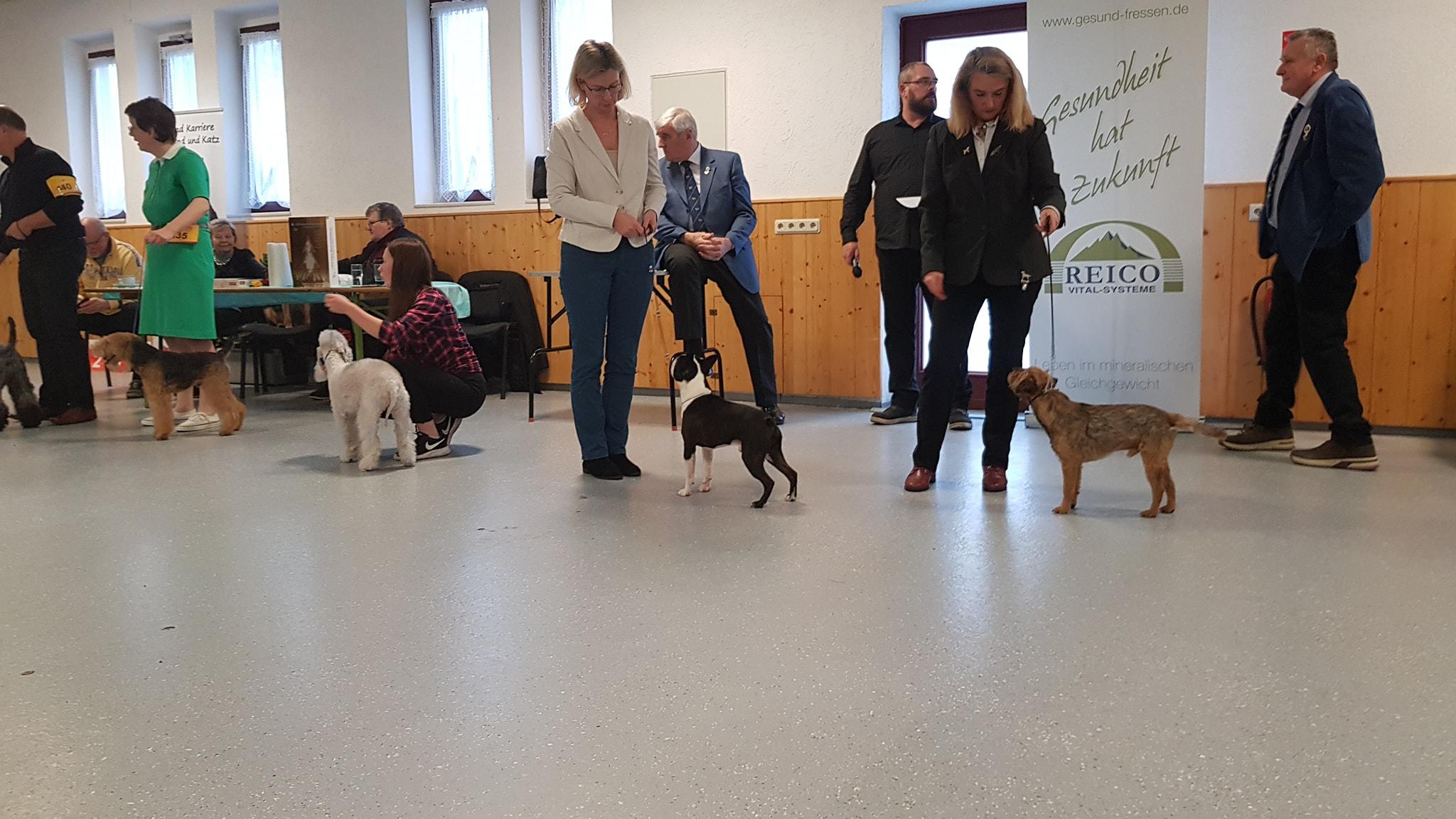Terrier Special Show Reinsberg